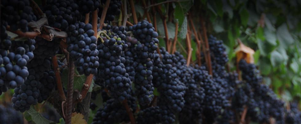 Banner Wines