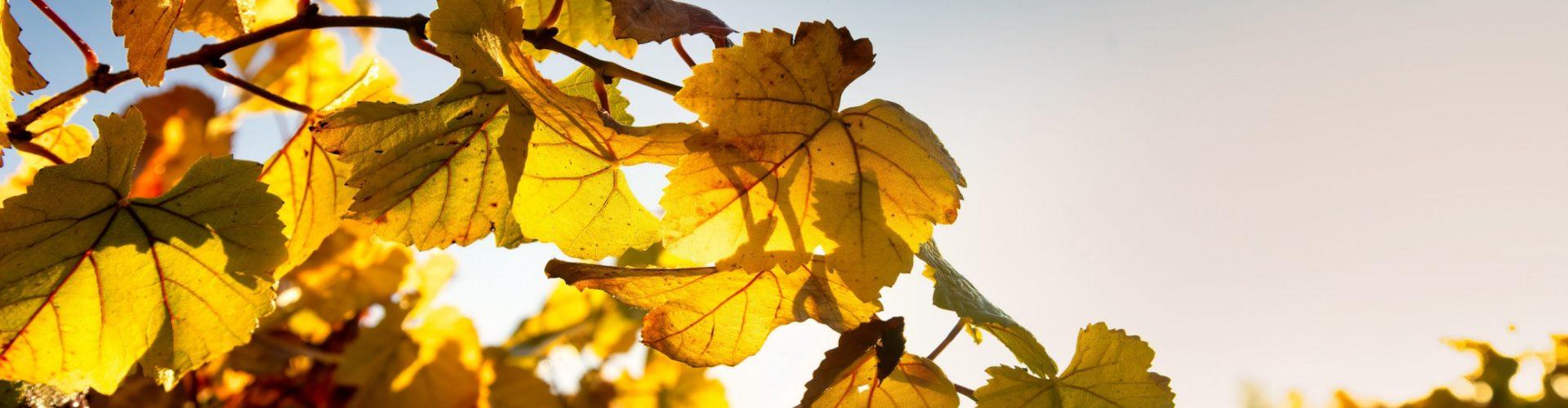 Photo leaves 2x