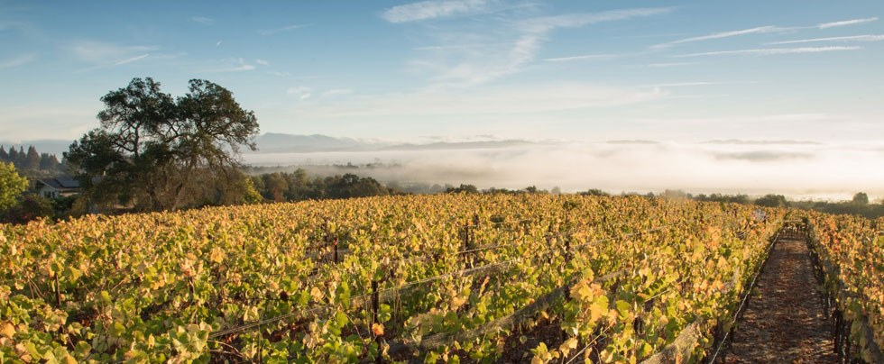 Lynmar estate advocates club announcement november 2019 vineyard lt