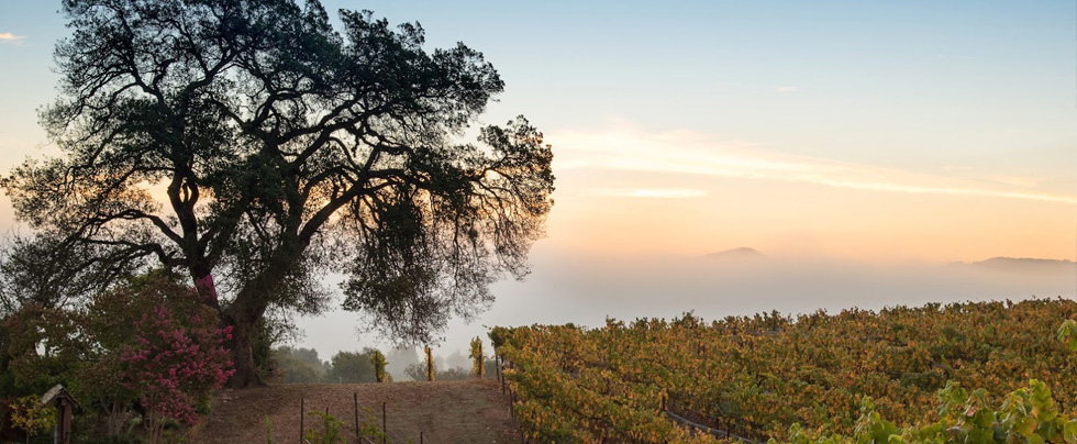 Lynmar Estate Vineyard Advocates Club Announcement 201811