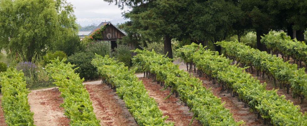 Lynmar Estate Vineyard Advocates Club Announcement Sep